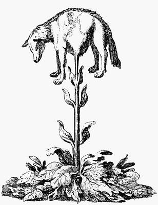 85a1a-vegetable_lamb_tartaria