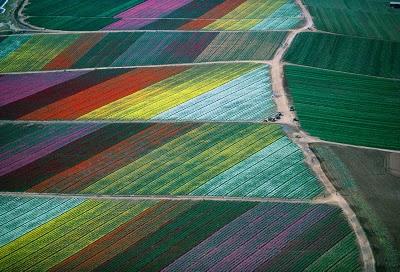 bf7a8-cut_flower_fields